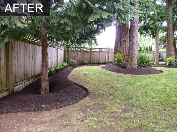 backyard makeover with irrigation system for home in langley  bc